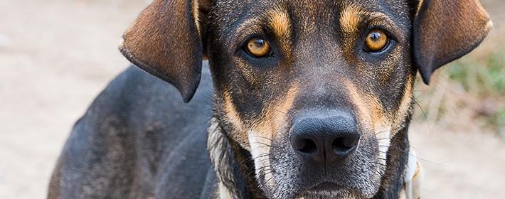 Звук отпугивающий собак скачать
