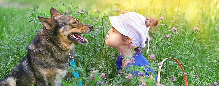 Помогают ли ультразвуковые отпугиватели собак схемы электронный отпугиватель для кротов своими руками фото